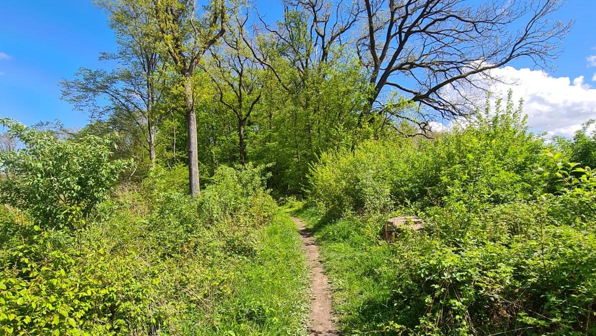 Idyllisch: Der Weg ist das Ziel und im Burgstallwald auch wunderschön.
