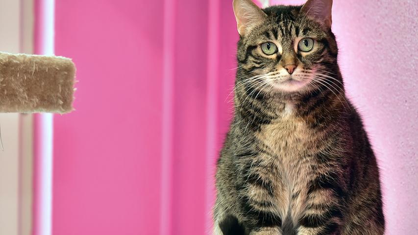 Die Katze Lucia kam als Fundkatze ins Erlanger Tierheim. Sie ist etwa zehn bis elf Jahre alt und hat gestromtes Fell mit etwas roter Farbe. Eine freundliche und zutrauliche Katzendame, die ihren eigenen Kopf hat und einen Platz mit täglichem Freigang braucht