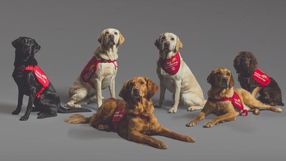 Hohe Trefferquote: Hunde erschnüffeln Corona-Infizierte