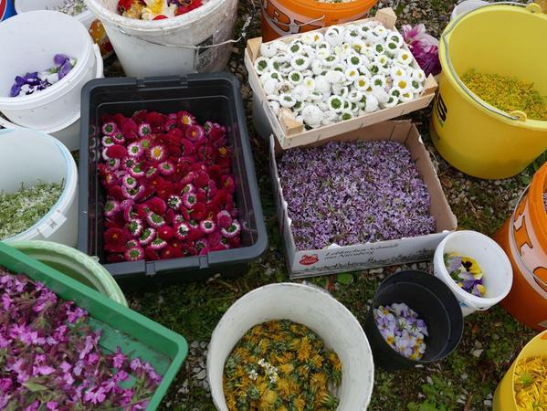 35 verschiedene Behälter in allen Größen fassten die gesammelten Blumenköpfe, strikt getrennt nach Farben und Arten.