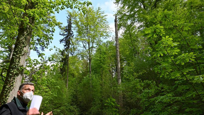 Wie im Märchen: So schön ist der Wald in Kalchreuth
