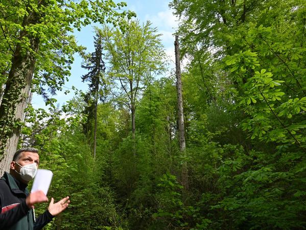 Forstingenieur Siegfried Dörfler liebt die Natur von Kindheit auf und freut sich über einen Wald wie in Kalchreuth. Denn dieser, erläutert der Fachmann, ist im ökologischen Gleichgewicht.