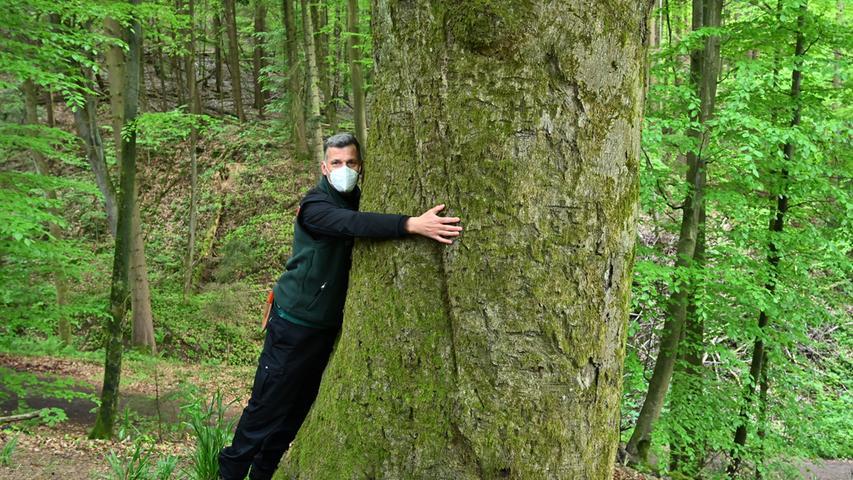 Mit dem Förster Siegfried Dörfler unterwegs im Märchenwald bei Kalchreuth. Eine mächtige Buche. Foto: Klaus-Dieter Schreiter