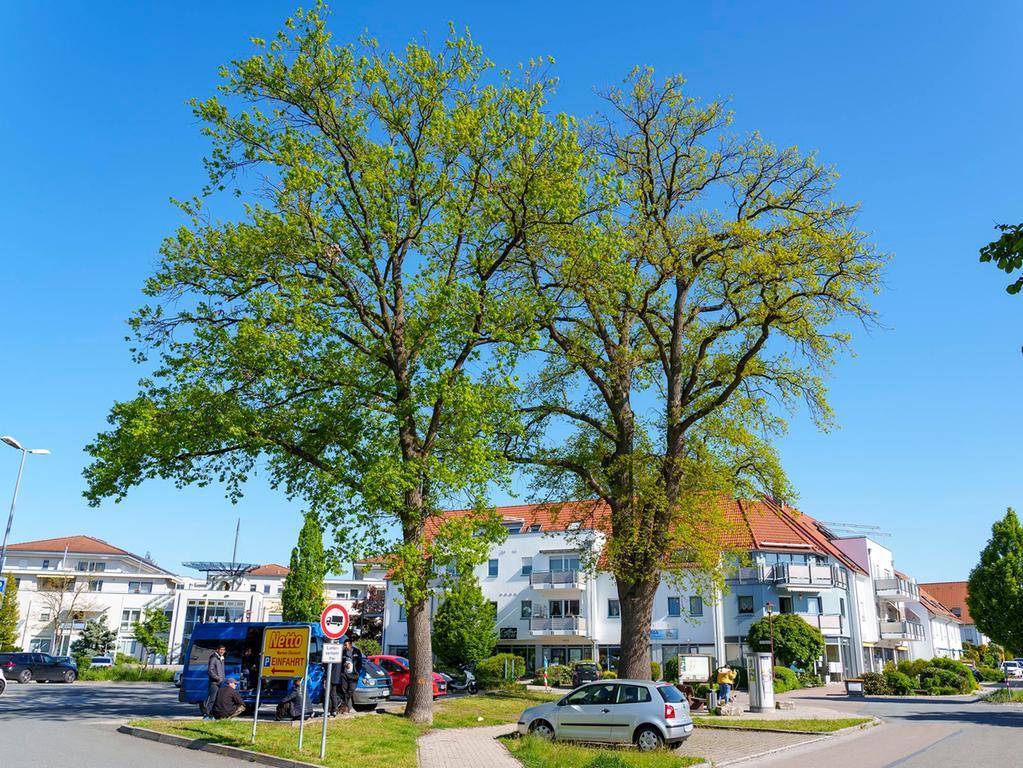 Alte Eichen im Landkreis (Schwanstetten) Salvatore Giurdanella 29.05.2021