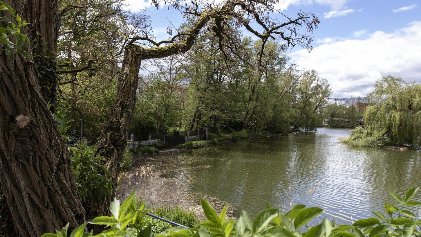 Der Schlossweiher bekommt das meiste Wasser aus dem Leitgraben, der durch intensiv gedüngte Wiesen und Felder fließt und so viele Nährstoffe mitbringt. Das Ergebnis: Es wuchern derzeit wieder viele Algen hinauf bis zur Oberfläche.
