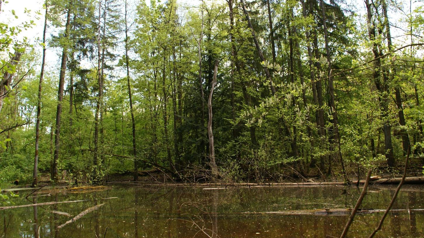 Was passiert mit dem Muna-Areal? Das Landratsamt und das Wasserwirtschaftsamt sehen nach den ersten Ergebnissen, die die Center-Parcs-Gutachten gezeigt haben, nun Bedarf für weitere Untersuchungen und möglicherweise auch für Sanierungsmaßnahmen. Da die Fläche noch nicht verkauft ist, ist nun erstmal der Bund zuständig.