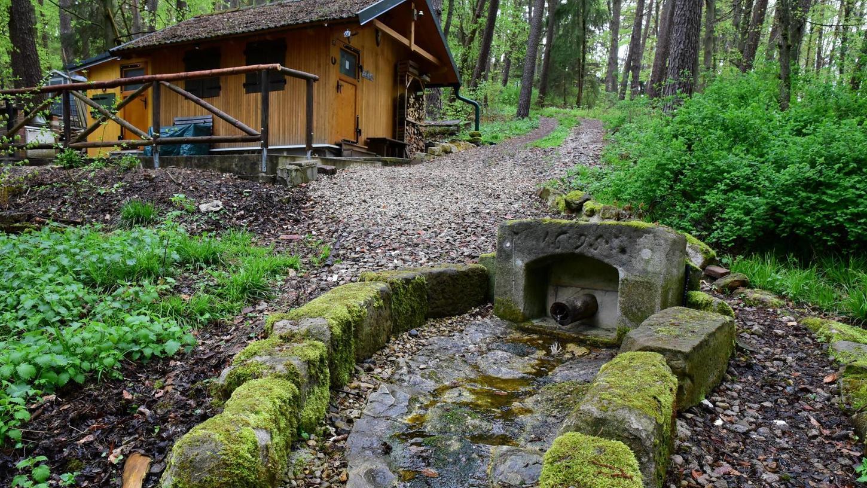 Forchheim: Mit einem Experten auf Spurensuche im Burker Wald