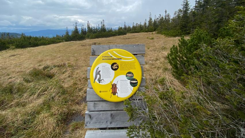 Eine der Infotafeln im Hochmoor Schwarzriegelmoos. Dort oben, auf 1590 Metern Höhe gelegen, gibt es viele Tiere und Pflanzen zu entdecken, die ansonsten kaum zu beobachten sind.