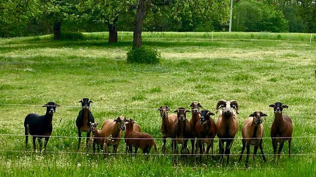 Neugierige Zaungäste in der Nähe vom Stirn am Brombachsee