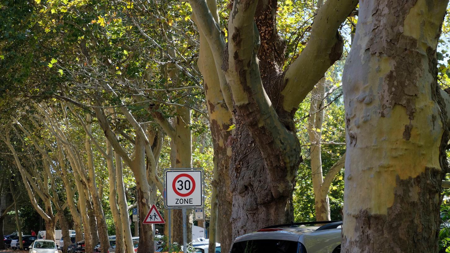 Im Straßenbaumkataster der Stadt sind rund 30 000 Bäume registriert.