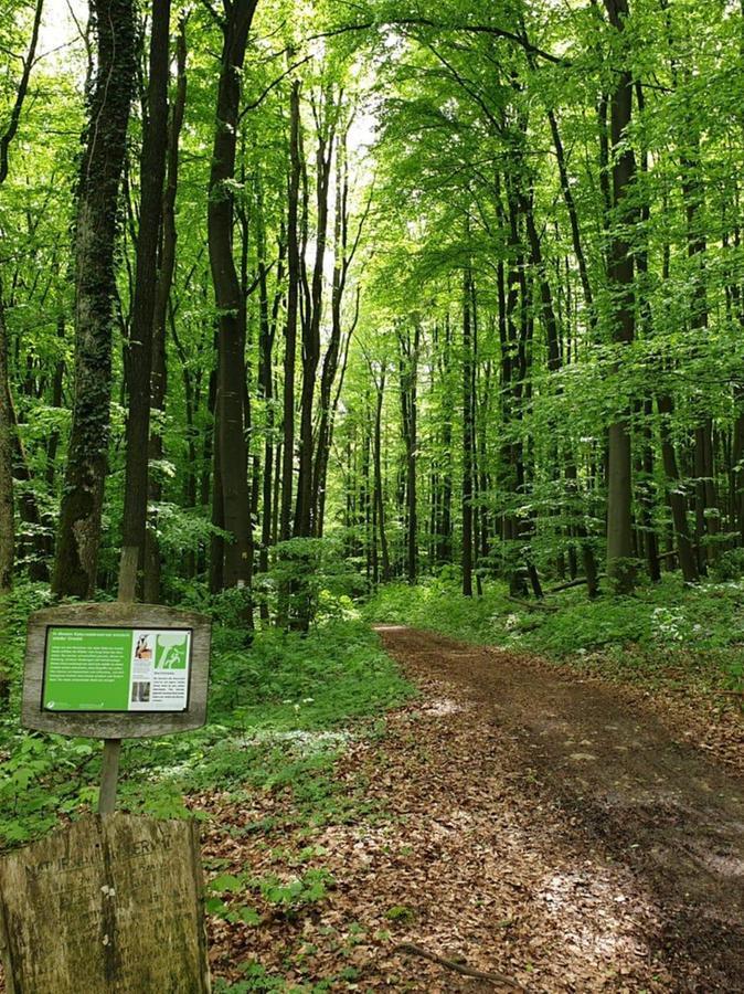 Hier fühlt sich Thomas Pawlicki besonders wohl: Der idyllische Höhenweg führt dicht umwaldet von Spielberg zum Gelben Berg.
