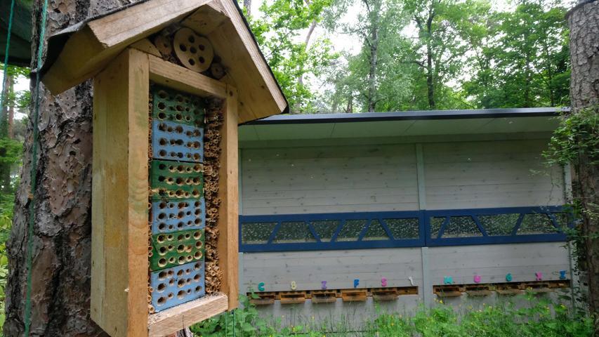 Nürnberg , am 05.06.2021 Ressort: Lokales  Foto: Roland Fengler Zabo ,   Imker Hertl,   Imker Hertl spricht über die Situation der Bienen und wie man seinen Garten / Balkon bienenfreundlich gestalten kann.