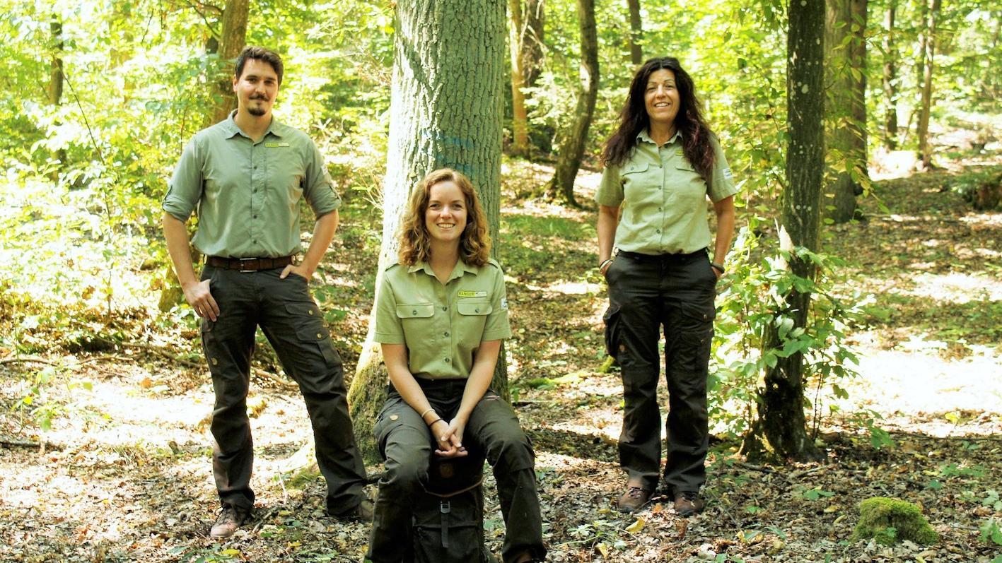 Das Team der Naturpark-Ranger freut sich, wieder zu Führungen im Steigerwald einladen zu können. Foto: Naturpark