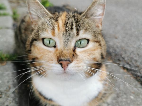EM-Katze Miezi aus Roth. Sie tippt nur die Deutschland-Spiele- für die anderen bleibt zwischen Mäusejagd und16 Stunden Schlafam Tag einfach nicht genug Zeit.