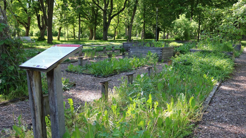 Der Apothekergarten: eine der vielen Nutzungen im Kurpark, die es zur Landesgartenschau miteinander zu verbinden gilt.