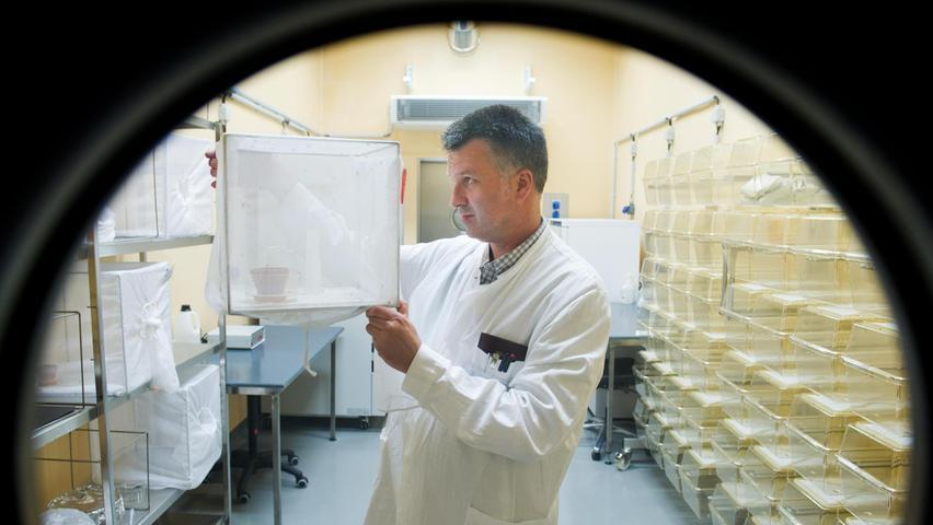 Milliarden Mücken: Experte sieht Plage auf Franken zukommen