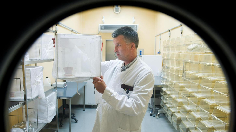 """Im """"Insektarium"""", einem Sicherheitslabor, nimmt der Wissenschaftler Helge Kampen auch gefährliche Mückenarten genauer ins Visier. Der Biologe leitet das Friedrich-Loeffler-Institut mit Sitz in Greifswald."""