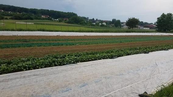 Solidarische Landwirtschaft Ebermannstadt expandiert nach Pretzfeld