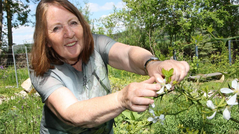 Die Dreiblattzitrone ist die einzige Zitrusfrucht, die in unseren Breitengraden gedeiht – im Bild weiß sie mit ihrer Blüte zu begeistern, auf die Barbara Krasemann hindeutet.