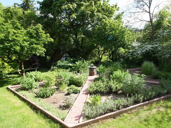 Im voriges Jahr befestigten Kräutergarten geht es wahrhaft multikulturell zu – vom römischen Schildampfer bis zum chinesischen Lauch.