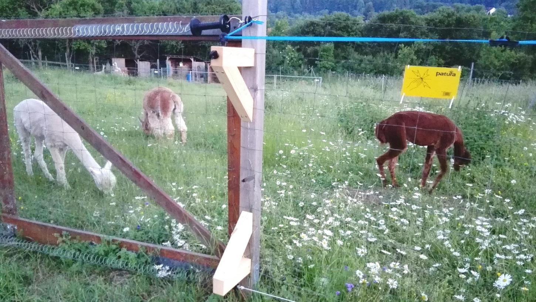 Zur Abwehr von Wölfen: Spezieller Zaun für den Wildpark Hundshaupten?