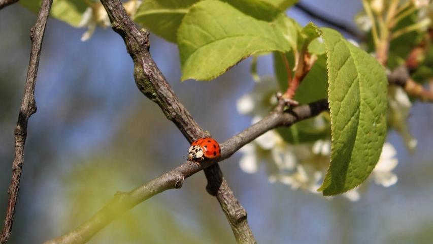Es kreucht und fleucht und blüht im Landkreis Forchheim