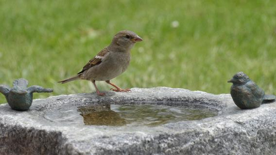 So sollte die Vogeltränke im Garten aussehen