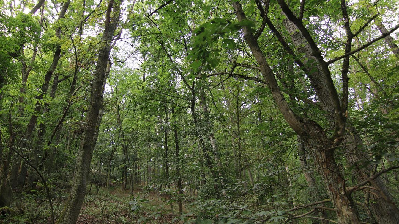 Naturerlebnisse pur bietet der Naturpark Steigerwald. Im Naturschutzgebiet Gräfholz und Dachsberge bei Oberntief wird unter anderem Waldbaden angeboten.