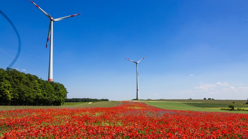 Blumenmeer in Franken: Mohnfeld erblüht auf über hundert Metern