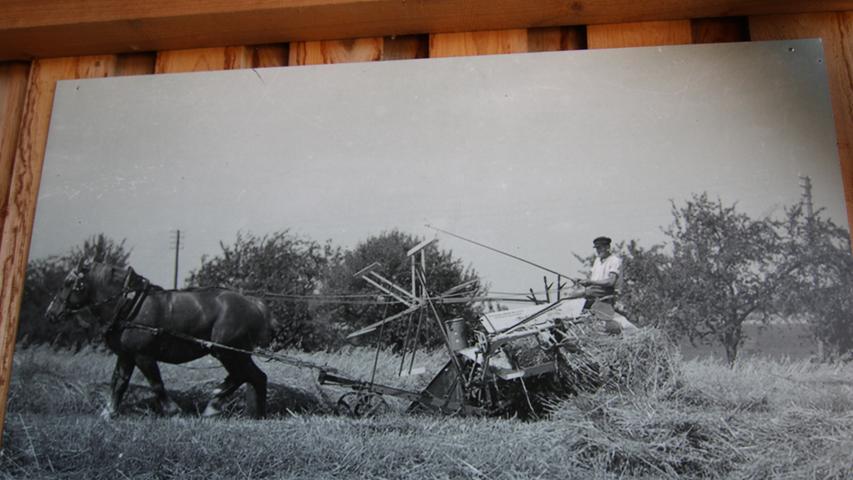 Und damals hatten auch Pferde eine ganz besondere Bedeutung für die Landwirtschaft, wie dieses Bild eines Mähbinders aus den 1930er-Jahren aus dem Ochsenfurter Gau, das aus dem Archiv Menth des Freilandmuseums stammt, zeigt
