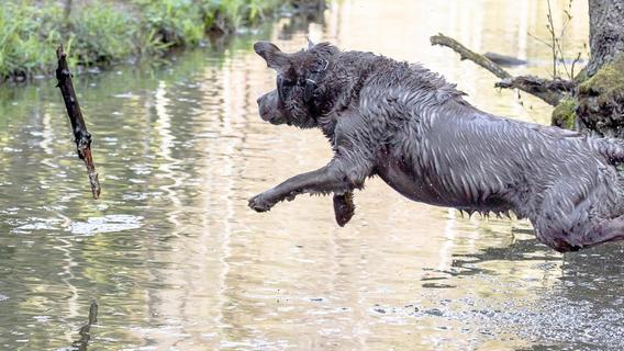 An diesen Orten dürfen Hunde noch baden