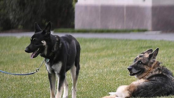 Bidens trauern um Schäferhund Champ