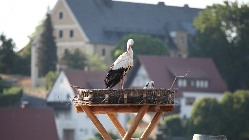 Ein Storchennest in Pegnitz.