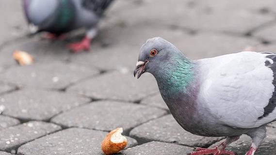 Tauben an fränkischem Bahnhof gefüttert: 61-Jährige zu Bußgeld verurteilt