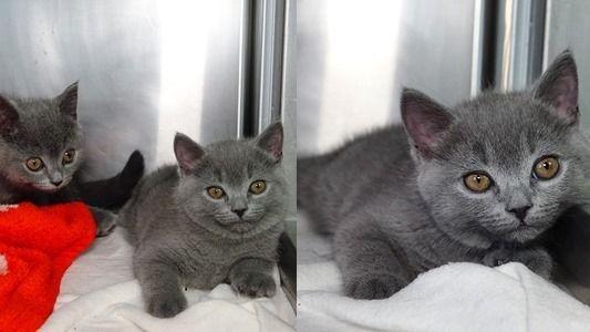 Ein Schmuggler wollte drei süße Katzen nach Frankfurt bringen. Auf der A6 wurde er aufgehalten. Die Kätzchen wurden ihm abgenommen.