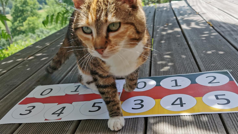 Ein 5:5 gegen England mit deutschem Sieg im Elfmeterschießen (4:2) - das wär´s! Vermutlich träumt EM-Orakel Miezi das nur, aber wer weiß...