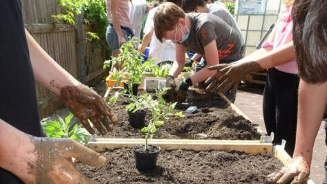 Fleißige Hände waren gefragt beim Herrichten der Pflanzerde, beim Wässern und Einpflanzen.