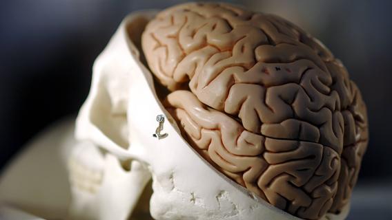 Tipps für die grauen Zellen: Gedächtnisexperte Markus Hofmann