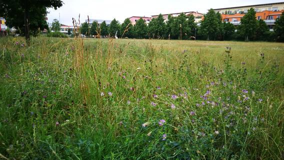Im Röthelheimpark in Erlangen wuchert die Natur