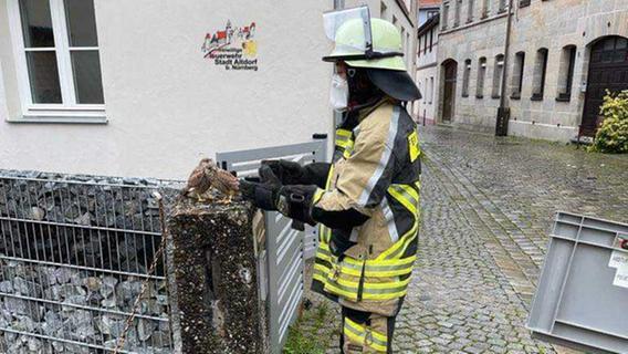 Altdorfer Feuerwehr rettet zwei Baby-Wanderfalken und bringt sie zurück ins Nest