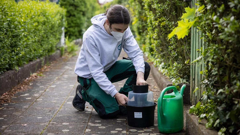 Der Tigermücke in Fürth geht es an den Kragen: Mitarbeiter der Firma APC suchen nach möglichen Brutstätten der Insekten. Bald steht eine neue Offensive an.