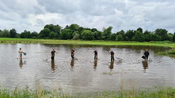 Hochwasser: Darum haben die Teichwirte im Aischgrund Glück gehabt