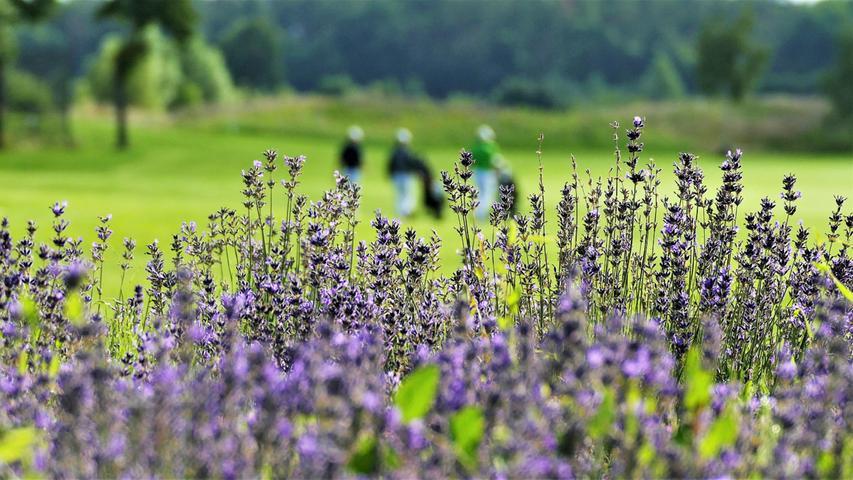 Auf dem Golfplatz in Herzogenaurach sieht man nicht nur gemähtes Grün, sondern auch viele Wildblumen. Diese natürlichen Elemente gehörenmittlerweile zum Konzept der Anlage.