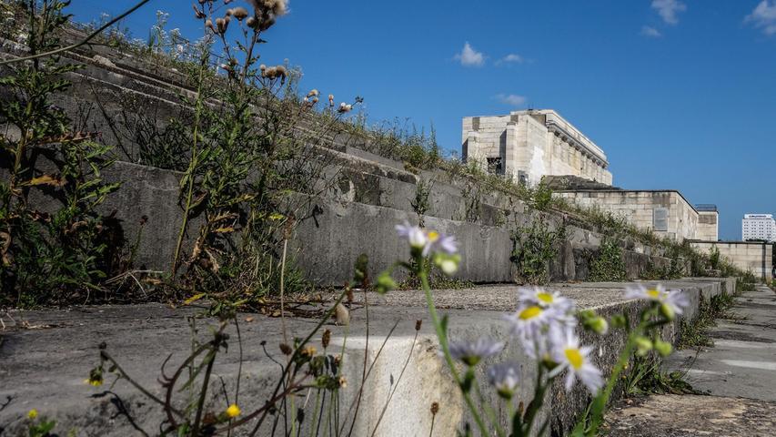 Blüten auf dem ehemaligen Reichsparteitagsgelände.
