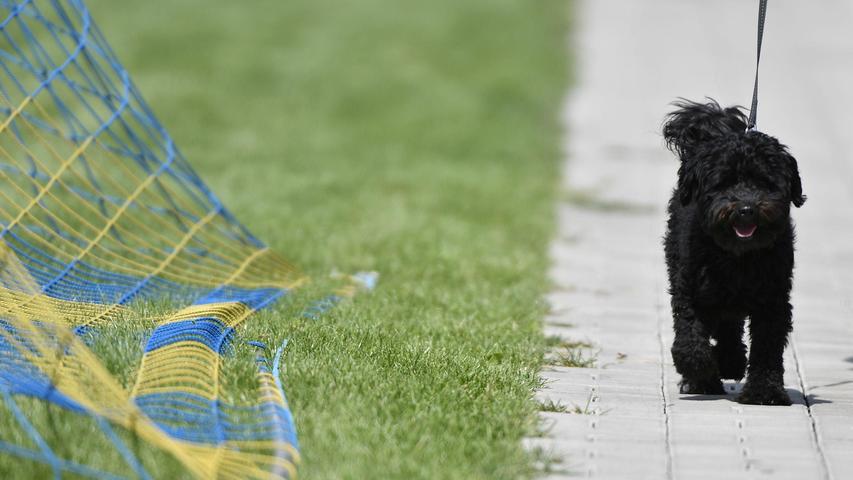 Wer führt wen an der langen Leine? DemSV Gutenstetten-Steinachgrund trauen die meisten Bezirksliga-Trainer den Aufstieg zu.