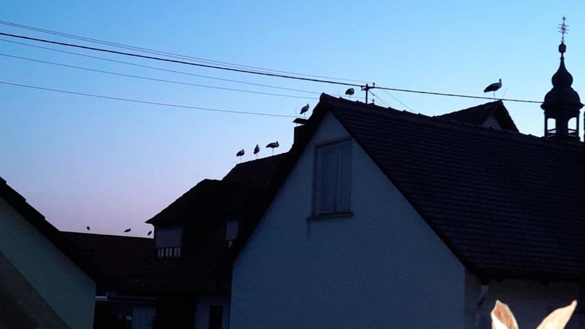 NN-Leserin Lydia Harrer hat in Forchheim, genauer gesagt bei der Kirche in Kersbach, Störche im Sonnenuntergang eingefangen.