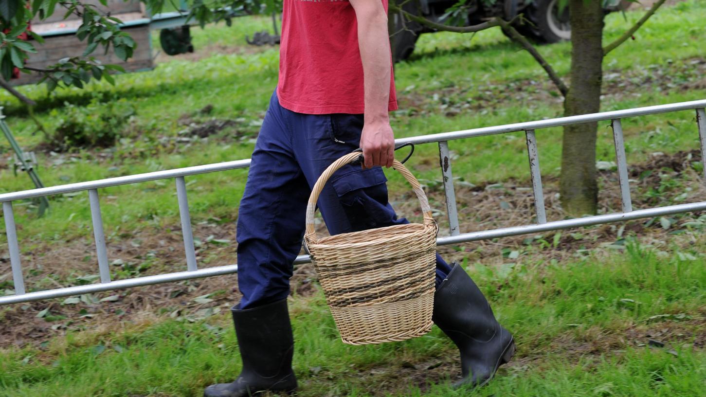 Wegen erhöhter Unfallgefahr will ein Versicherer Landwirte in Bayern nun dazu bewegen, Leitern bei der Arbeit zu meiden.
