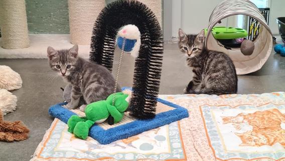 Schock-Fund in Franken: 27 Katzen aus vollgestopfter Wohnung gerettet