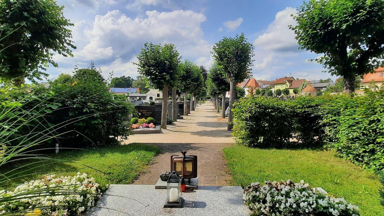 Die Hauptachse des Friedhofs führt vom Priestergrab (im Vordergrund) zum Eingang in Richtung Stadt. Die Lindenbäume sind Knackpunkt bei der Sanierung.