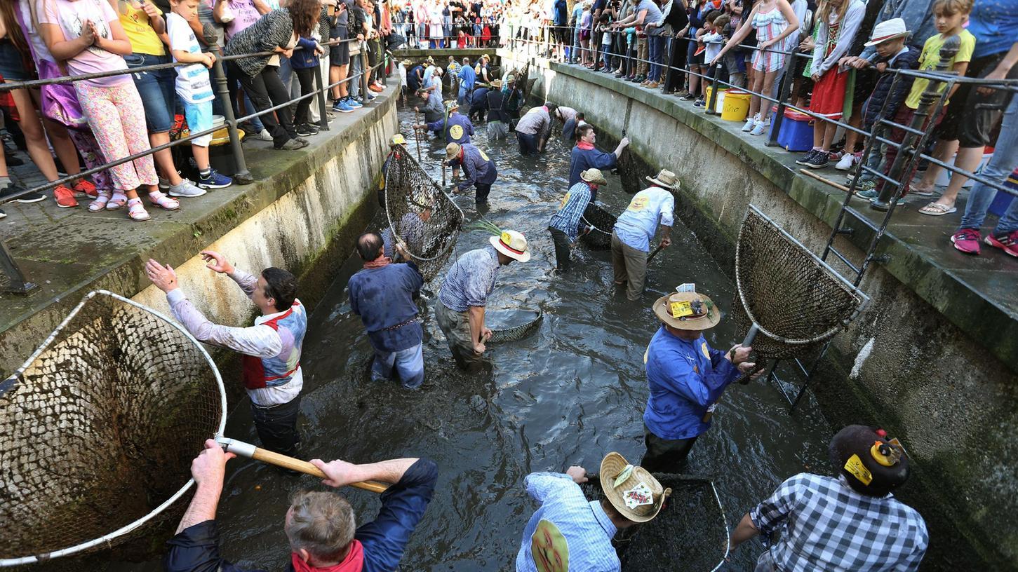 Beim Memminger Fischertag standen bisher beim Ausfischen und der Jagd auf die größte Forellenur Männer im Stadtbach.